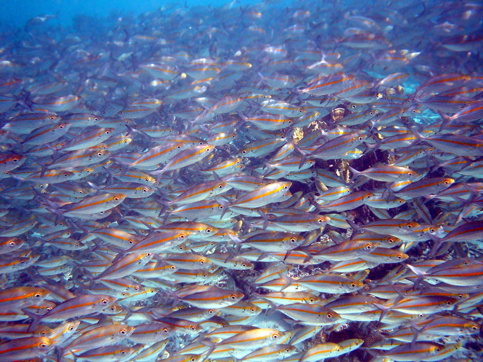 گله ماهی در آب با کیفیت طبیعی