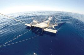 اخبار شیلات جهان پرورش ماهی ماهی خاورخاوریازی